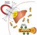利用纳米磁铁对体内CRISPR/Cas9基因组编辑进行空间控制