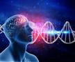走进AI,先从大脑记忆和网路记忆开启 ——记忆的奥秘——