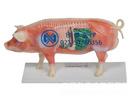 猪体针灸穴位模型
