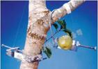 DEX果實-樹木莖干生長測量儀