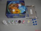 小鼠MDC/CCL22检测Elisa试剂盒