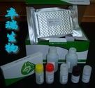 猴子脑钠素/脑钠尿肽(BNP)Elisa试剂盒