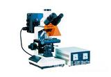 落射荧光显微镜 MF20