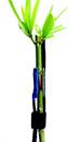 SGDC 外皮包裹式植物茎流传感器