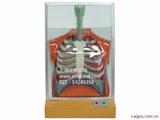 人体呼吸运动电动模型