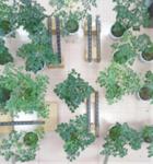 无线远程植物冠层在线分析系统LAINet