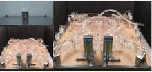 QT-WII20大型昆蟲四臂嗅覺觀測系統