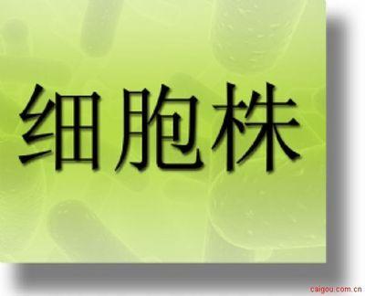 肺炎链球菌