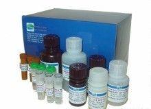 小鼠乙型肝炎表面抗体(HBsAb)ELISA试剂盒