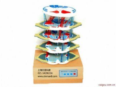 脊髓内部结构电动模型