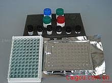 小鼠Elisa-雌三醇试剂盒,(E3)试剂盒