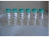 谷氨酸受体NMDAζ1抗体