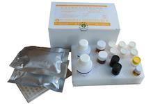 猫胱天蛋白酶3ELISA试剂盒