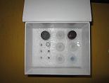 血小板膜糖蛋白ⅡbⅢaELISA试剂盒厂家代测,进口人(GP-ⅡbⅢa/CD41+CD61)ELISA Kit说明书