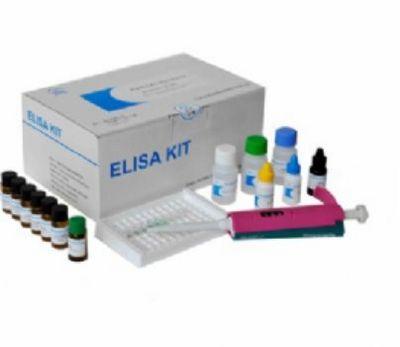 人基质金属蛋白酶7(MMP-7)ELISA试剂盒