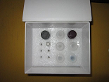 待测大鼠睫状神经营养因子(CNTF)ELISA试剂盒价格