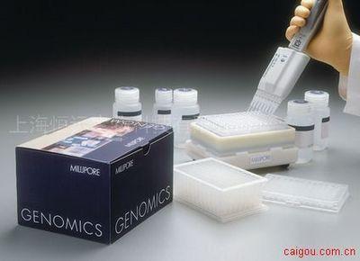 人麻疹病毒ELISA试剂盒