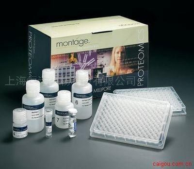 人β血小板球蛋白/β血栓环蛋白ELISA试剂盒