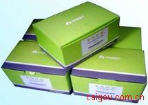 BAC/PAC DNA Kit