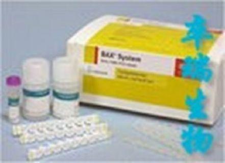 人基质金属蛋白酶4(MMP-4)Elisa试剂盒