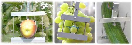 蔬菜水果直径测量仪