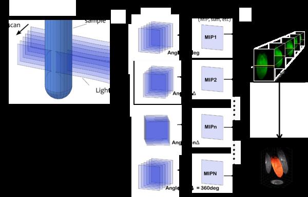 【新品發布】Planelight發布極速大視野光片顯微鏡QLS-Scope