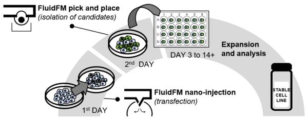 FluidFM BOT单细胞显微操作赋能CRISPR基因编辑取得重大突破——加速细胞系的开发进程,实现单个细胞多基因编辑