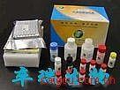 细胞凋亡测试盒(全套)(TdT介导的原位末端切口平移双标记法)