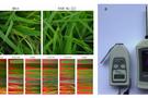 模块式植物表型分析技术方案(四) ——水稻稻瘟病、白叶枯病与干旱抗性的无损定量检测