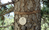 Dendrometer D1樹體莖干生長記錄儀
