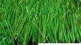 专业足球草