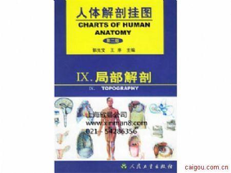 人體解剖學掛圖、局部解剖掛圖