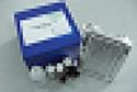 代测犬γ氨基丁酸(GABA)ELISA试剂盒价格