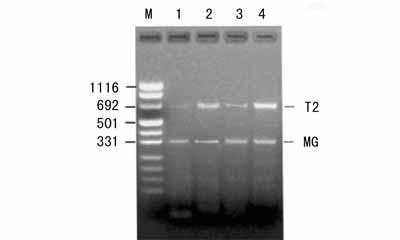 中科院细胞库供应 NCI-H446 人小细胞株肺癌细胞株