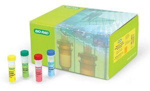 大鼠中性粒细胞趋化蛋白-2(GCP-2)ELISA试剂盒