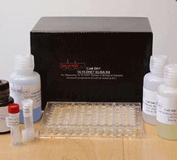 人碳酸酐酶(CA)ELISA Kit