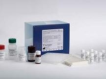 大鼠缪勒管抑制物质/抗缪勒管激素(MIS/AMH)ELISA试剂盒