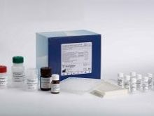 大鼠白细胞活化黏附因子(ALCAM)Elisa试剂盒